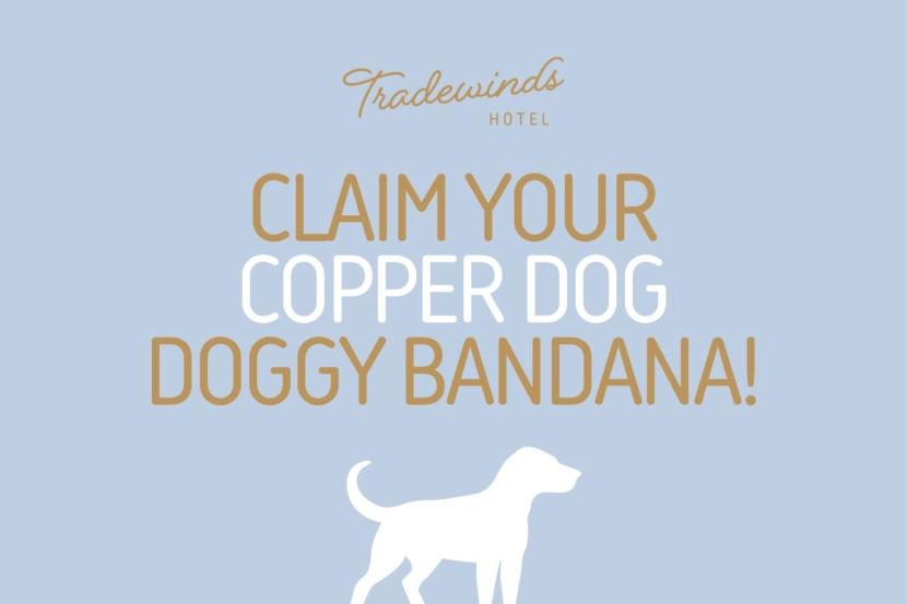 image: Copper Dog